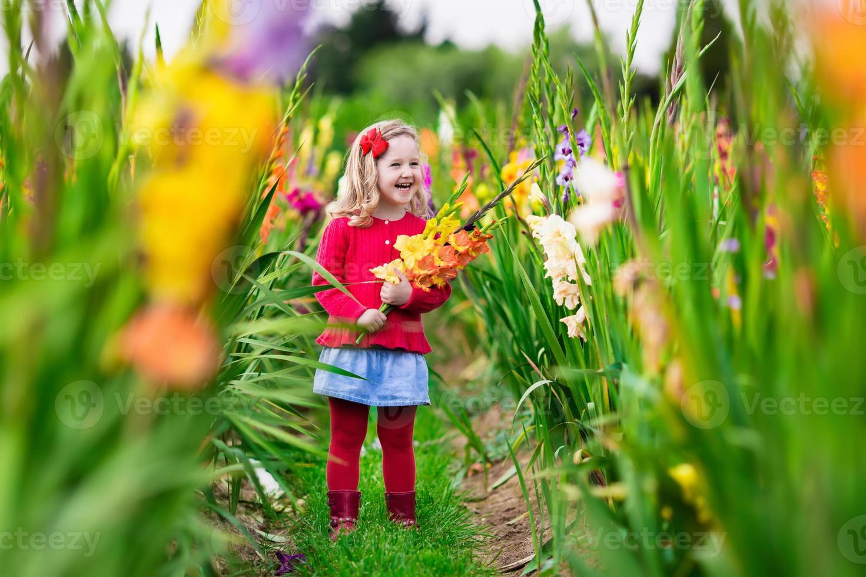 barn som plockar färska gladiolusblommor foto