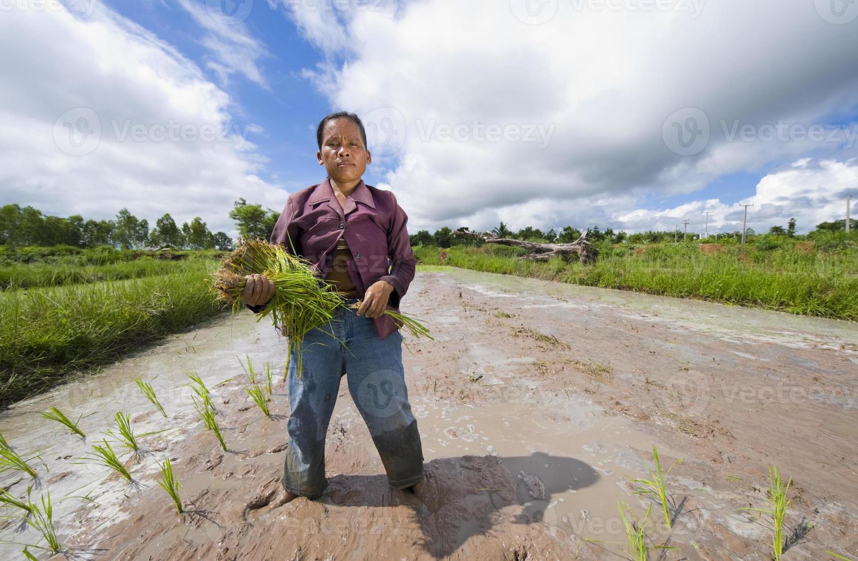 kvinnlig risbonde i Thailand foto