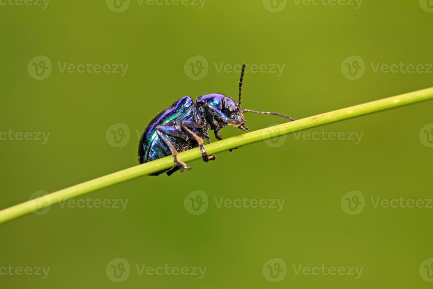 bladbaggar foto
