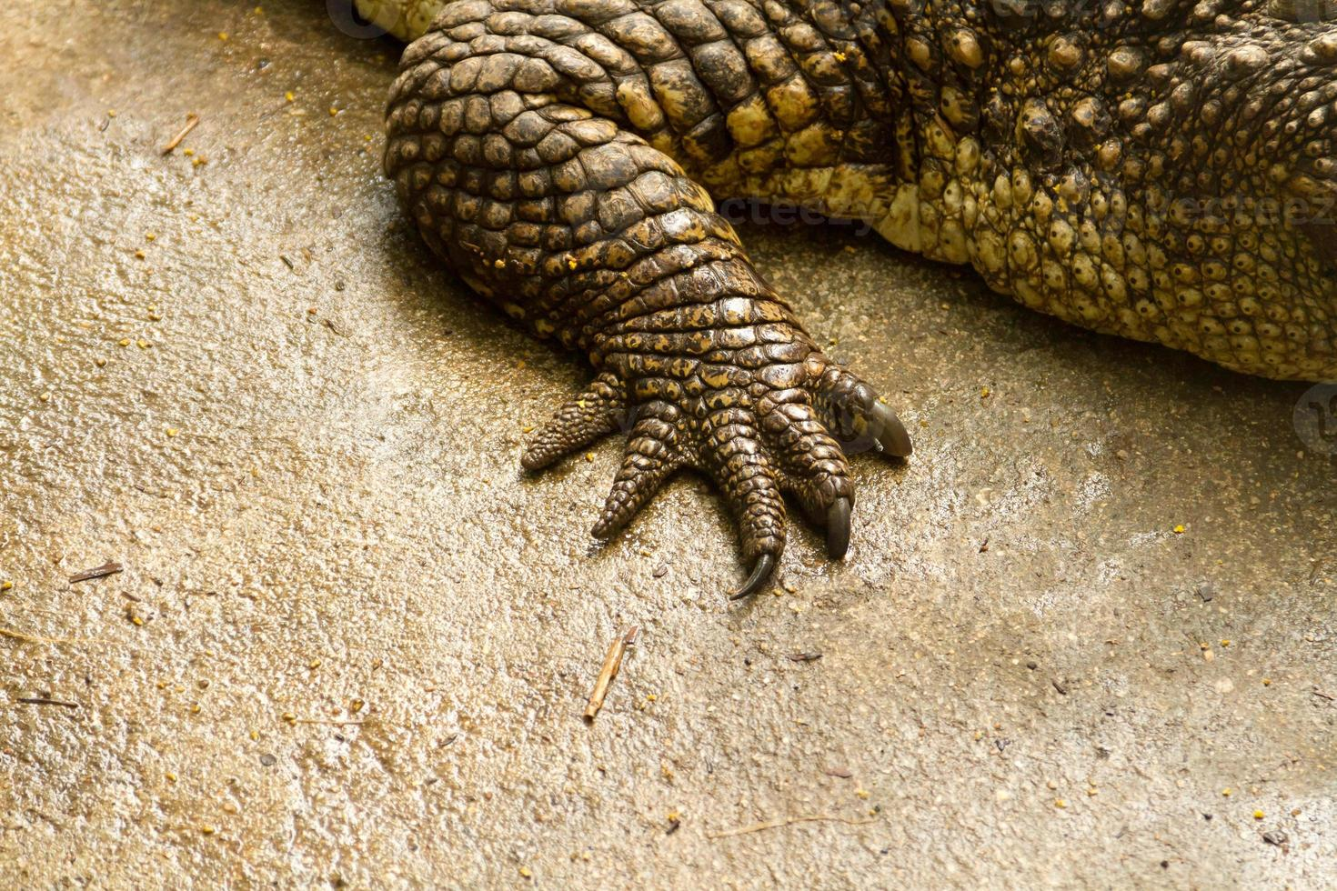 fot krokodil foto