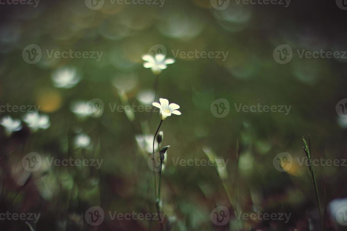 ensam blomma foto