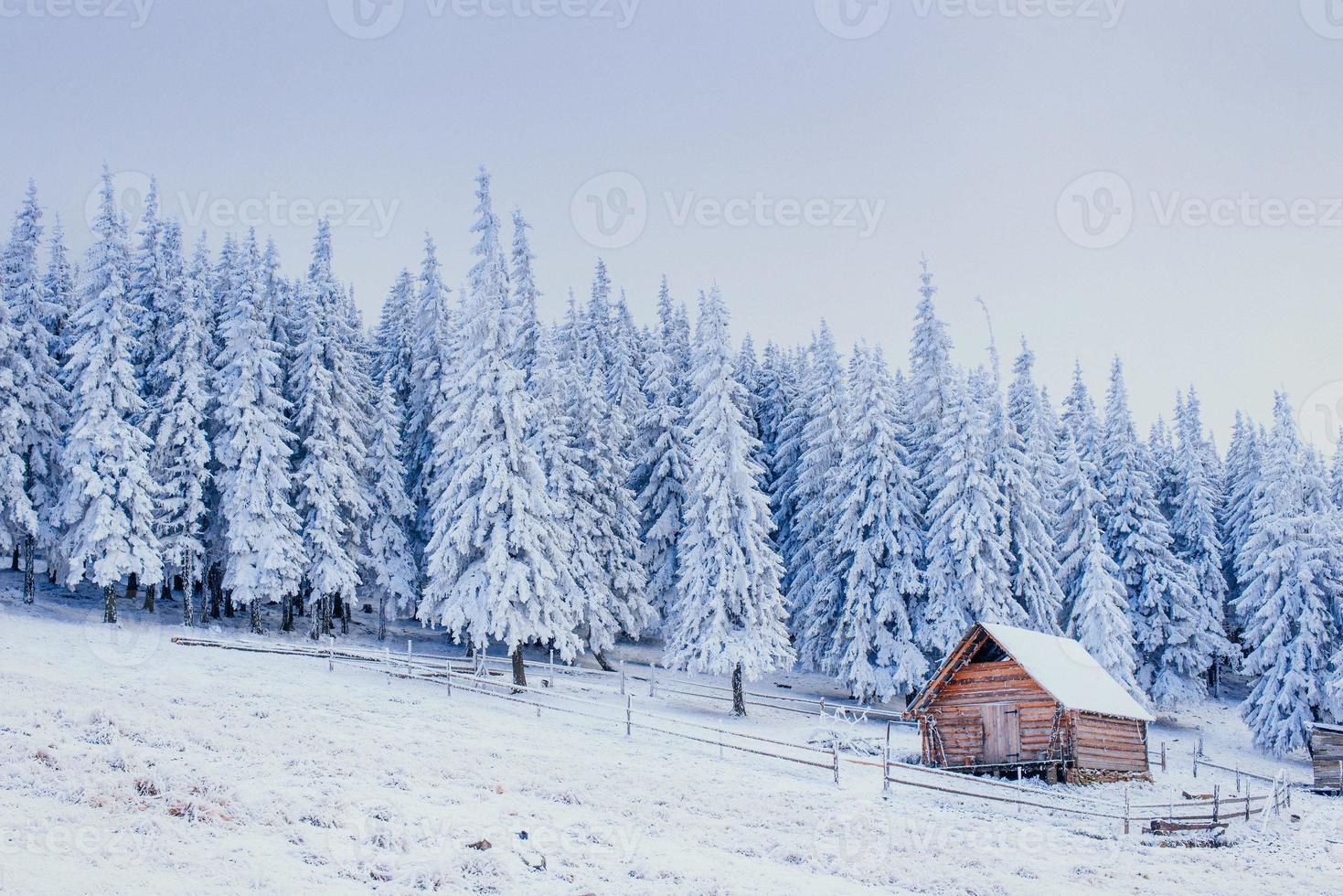 vinterlandskap av snötäckta träd i vinter rimfrost och c foto