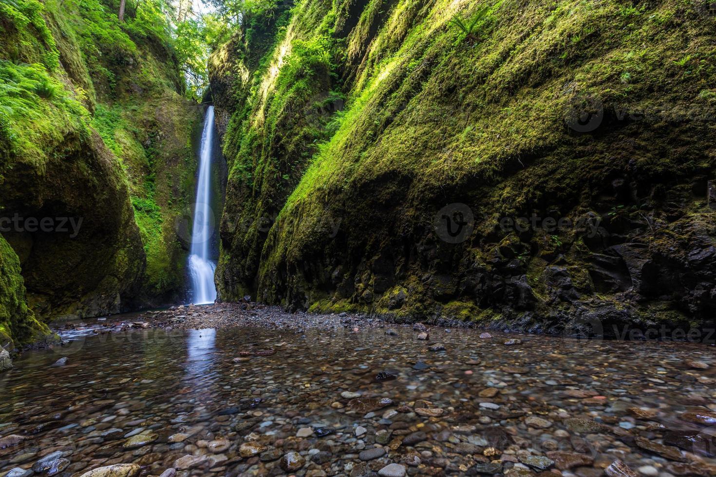 vacker natur i Oneonta Gorge Trail, Oregon foto