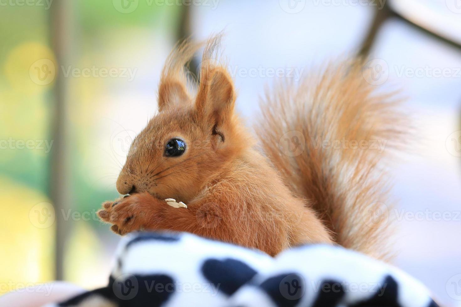 liten baby ekorre sitter och äter frön foto