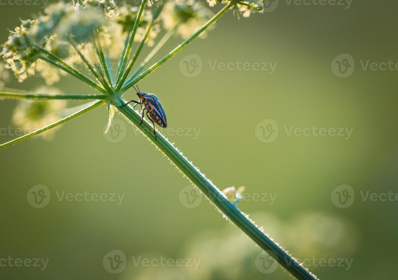 närbild av buggen som sitter på växten foto