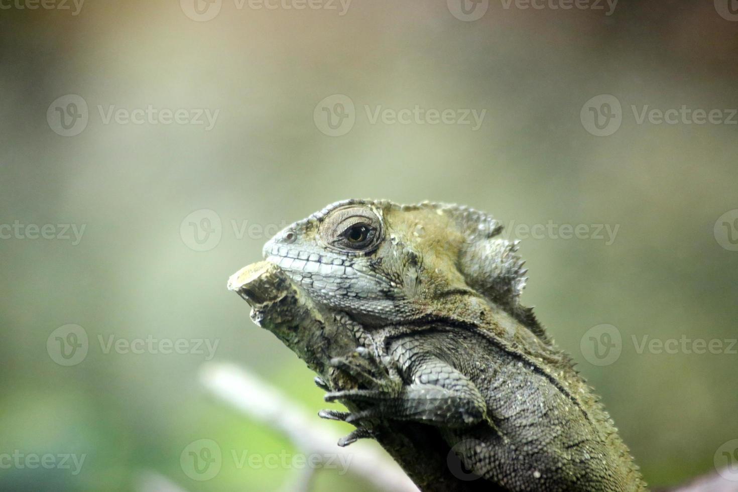 insekter och reptiler och makro foto