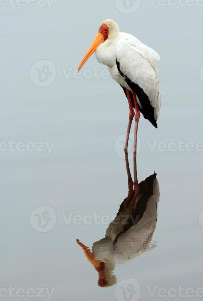 gulfakturerad stork foto