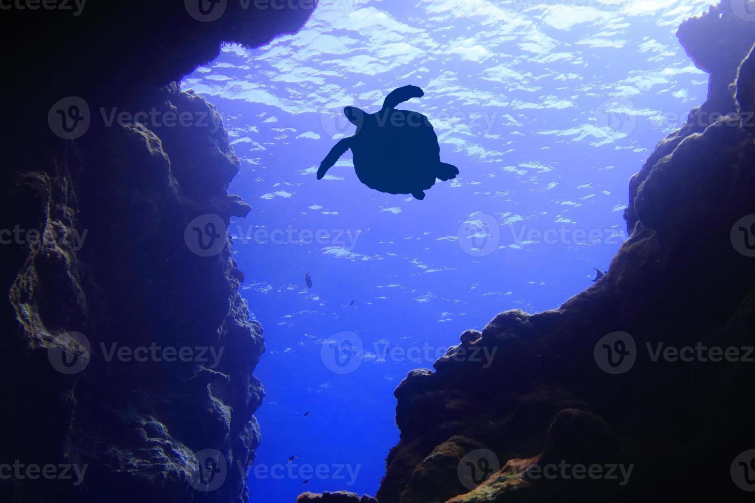 havssköldpadda silhuett foto