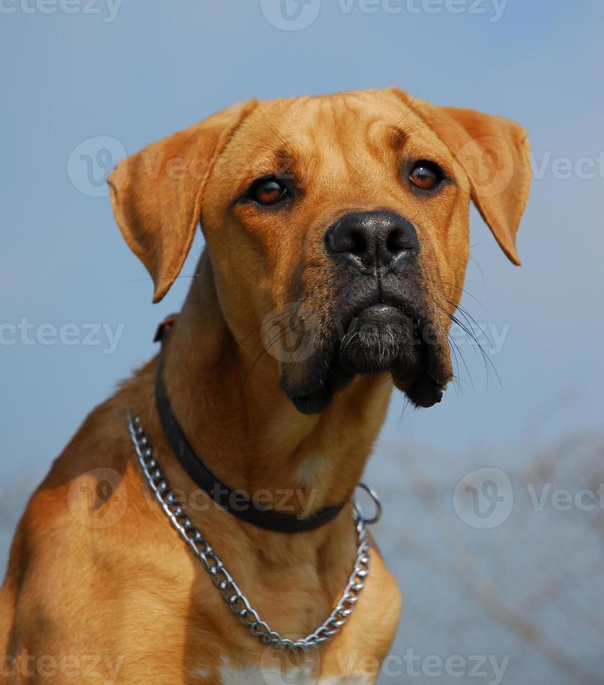 farlig hund foto