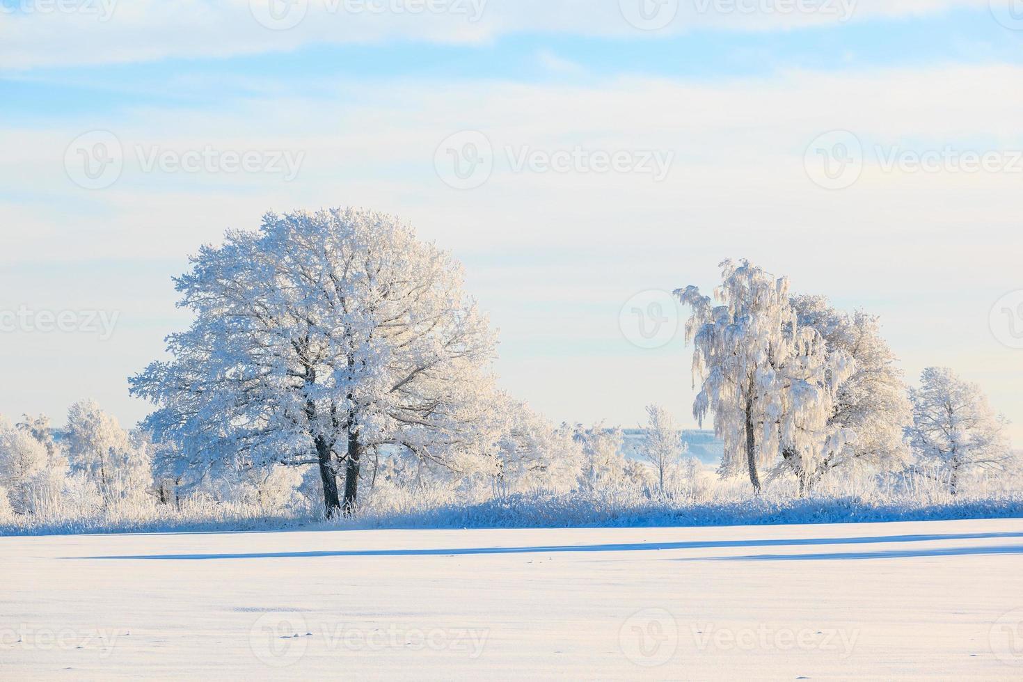 frostigt träd i snöig landskap foto