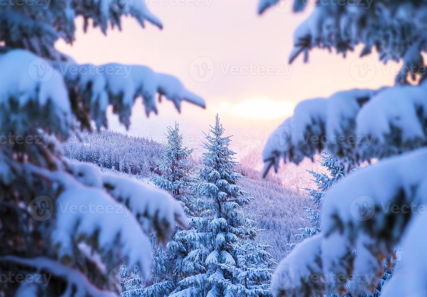 vacker vinterskog foto