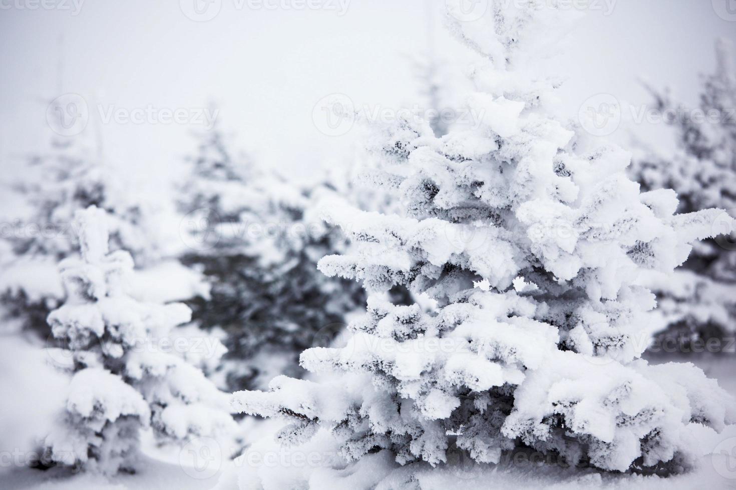 vinterskog med snö foto