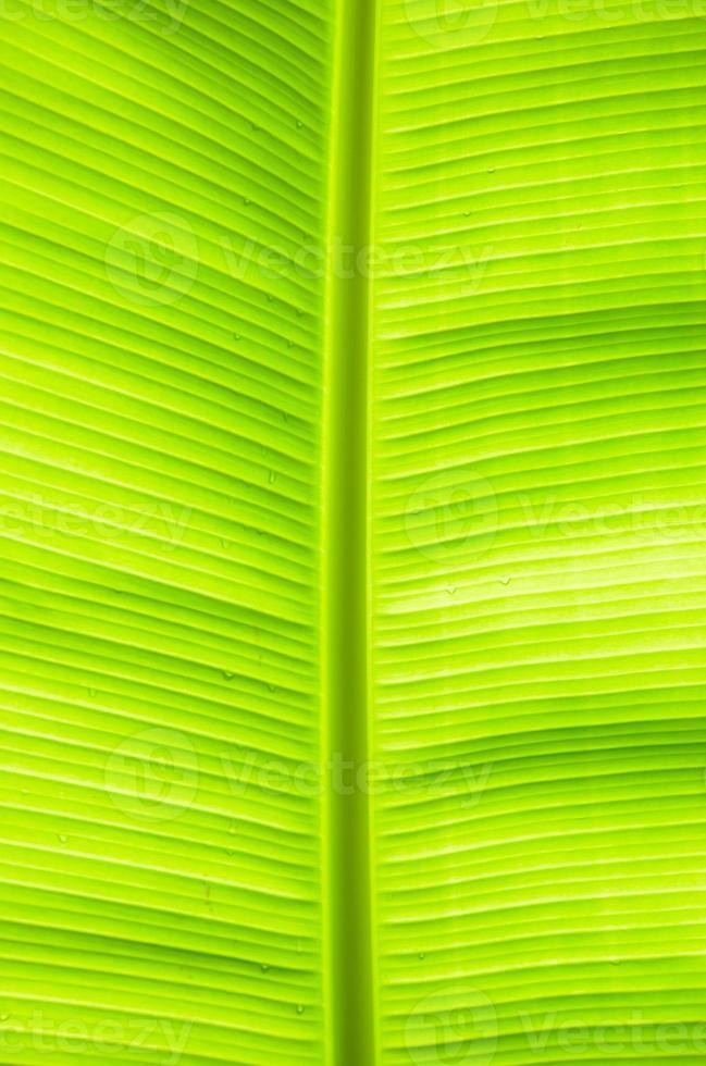 banan blad foto