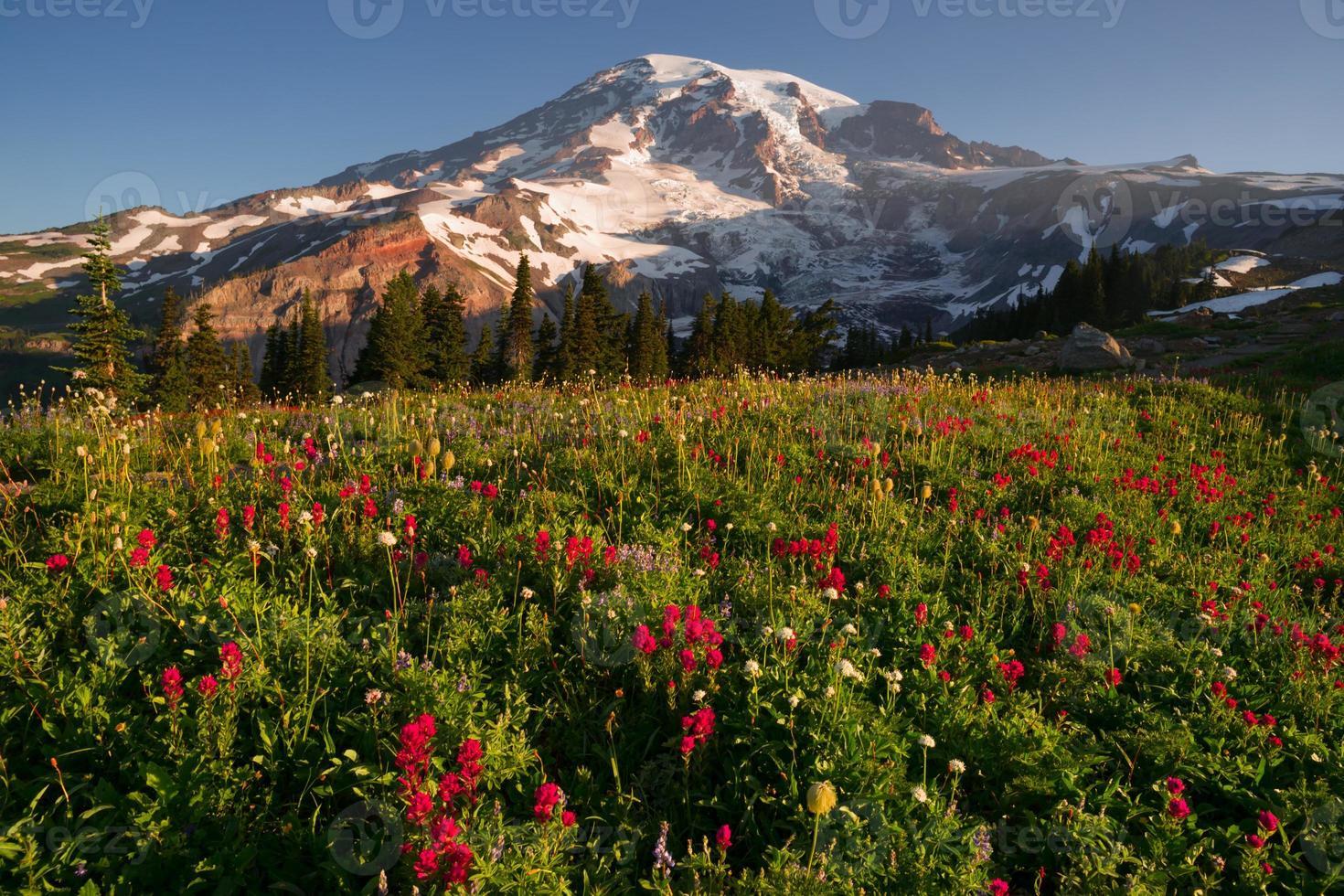 kaskadområde regnigare nationalpark berg paradis äng vildblommor foto