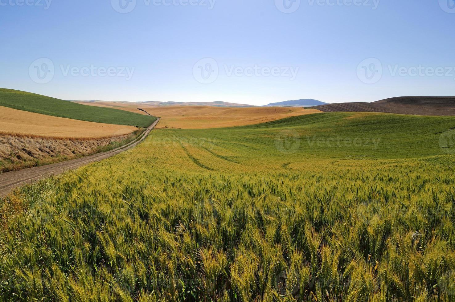 fält av vete, korn och sojabönor längs en landsväg foto