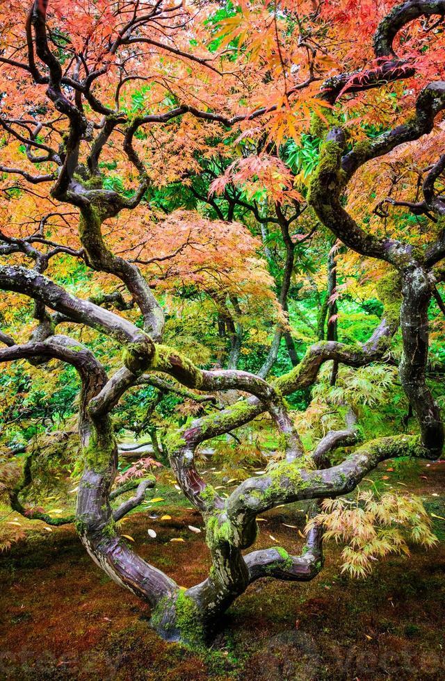 seattle japansk trädgård foto