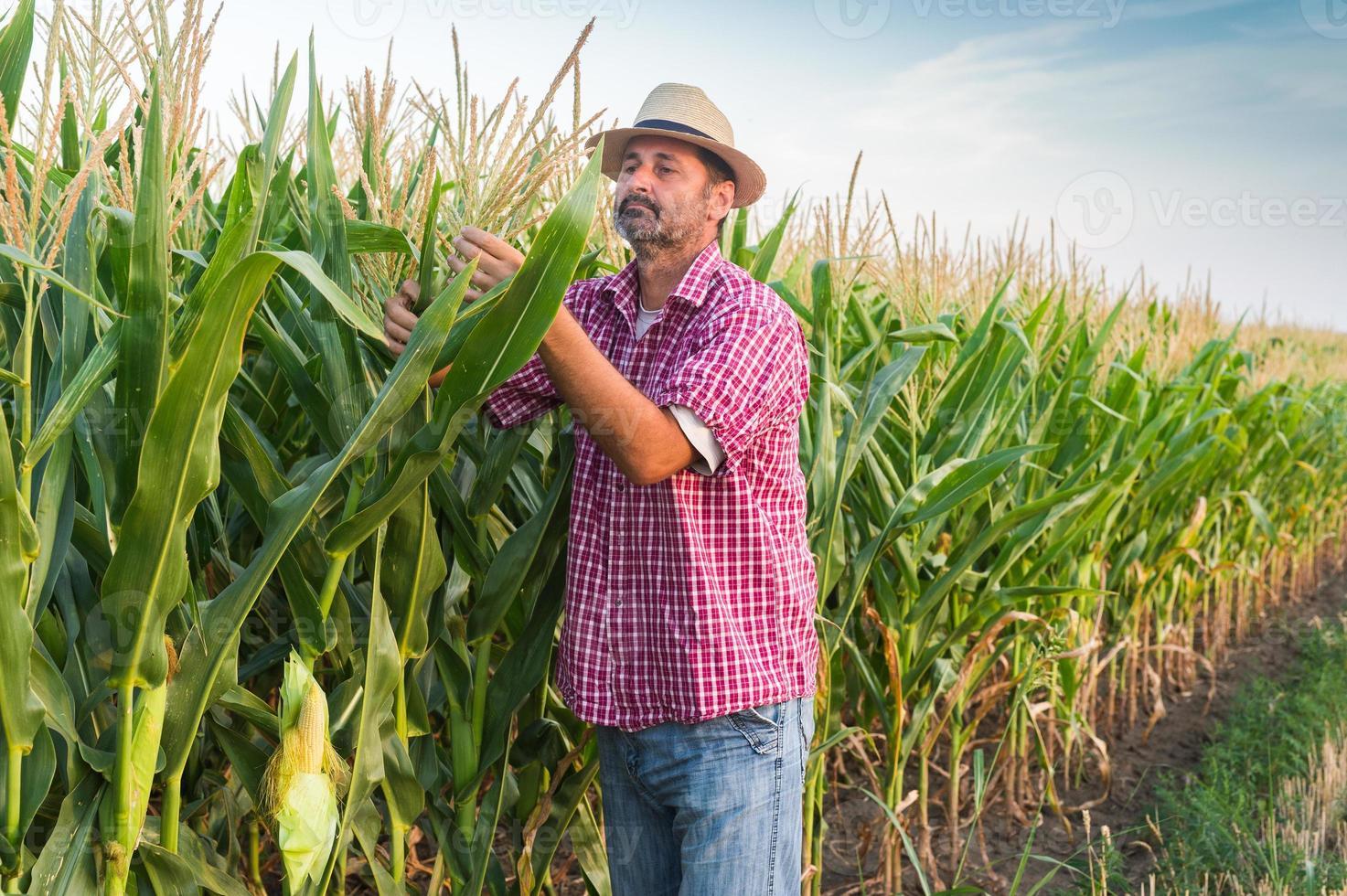 jordbrukare foto