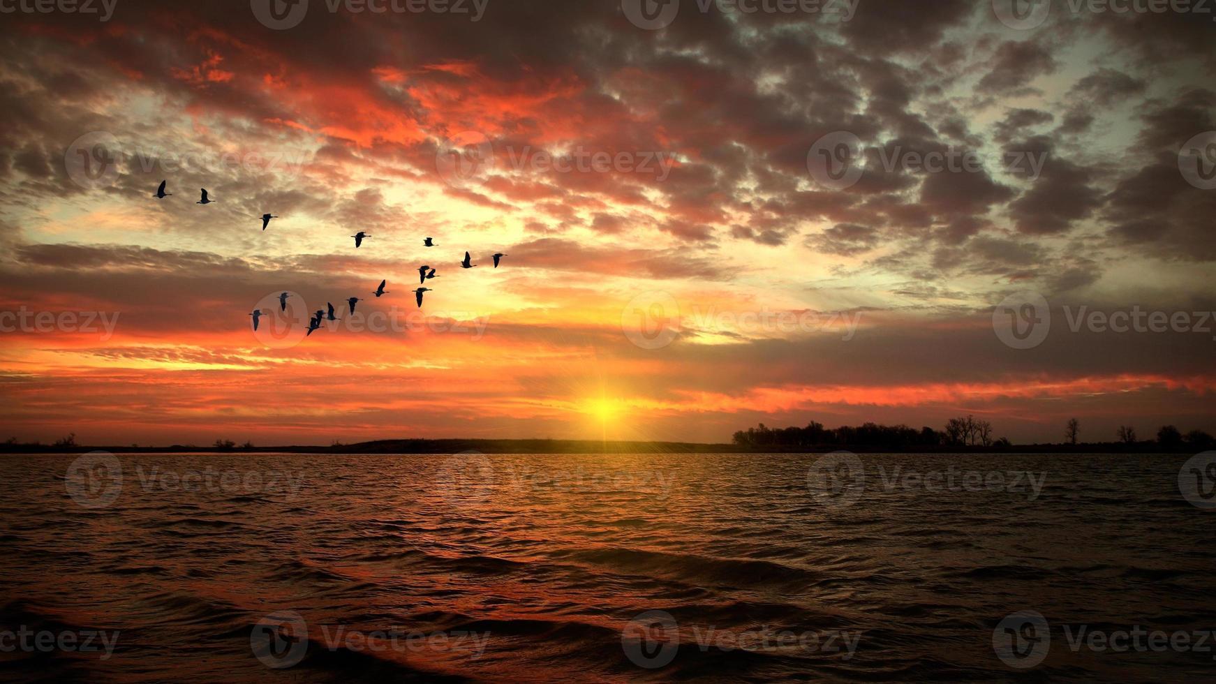 morgonstjärna foto