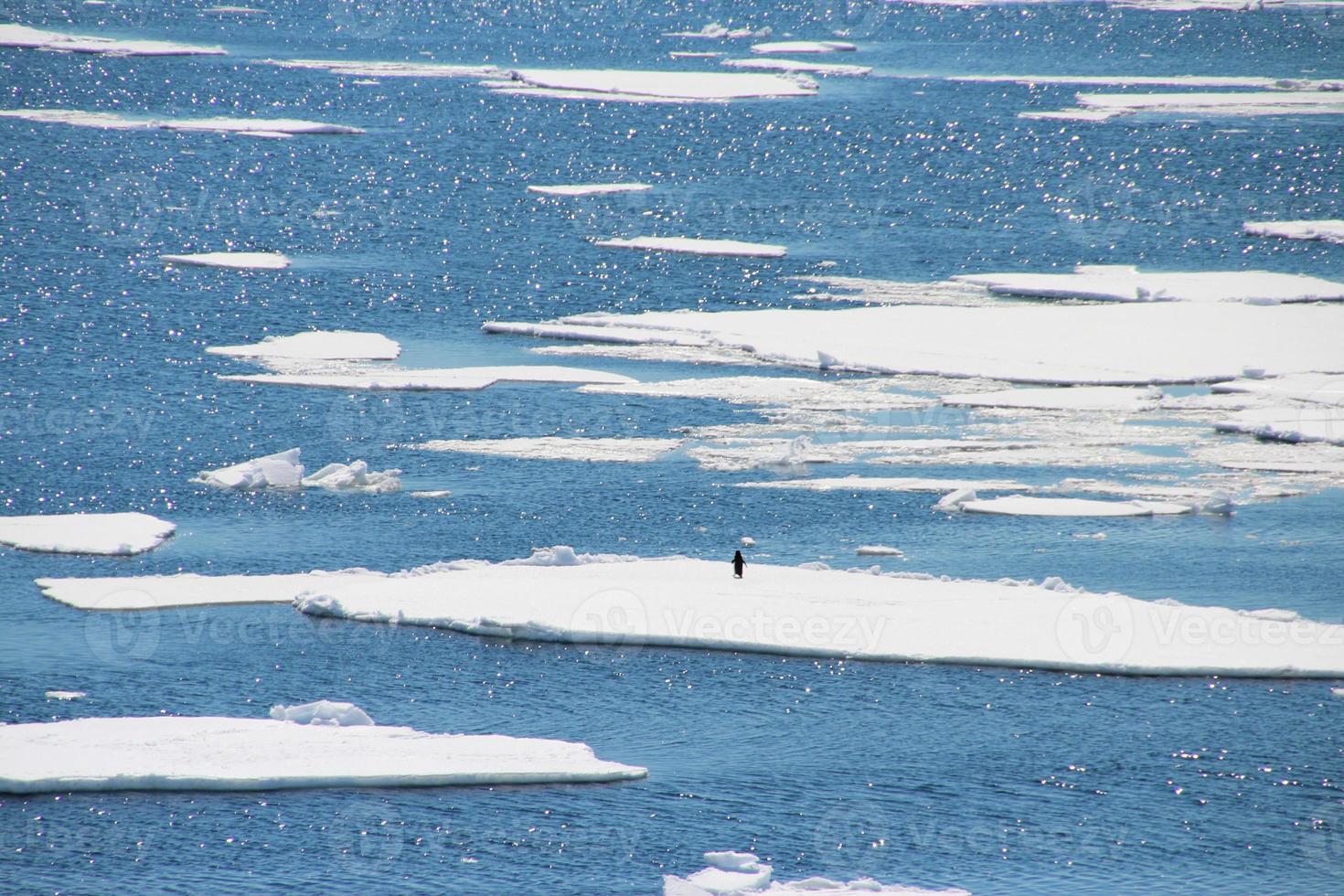 en ensam pingvin som går runt på isen i antarktis foto