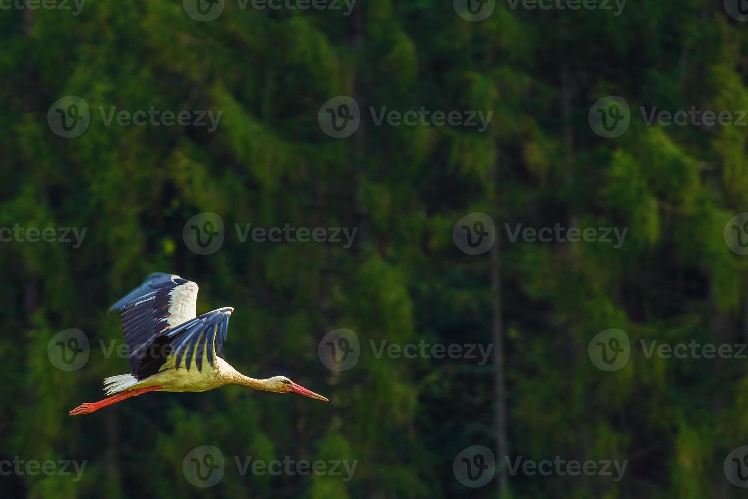 flygande vit stork fågel foto