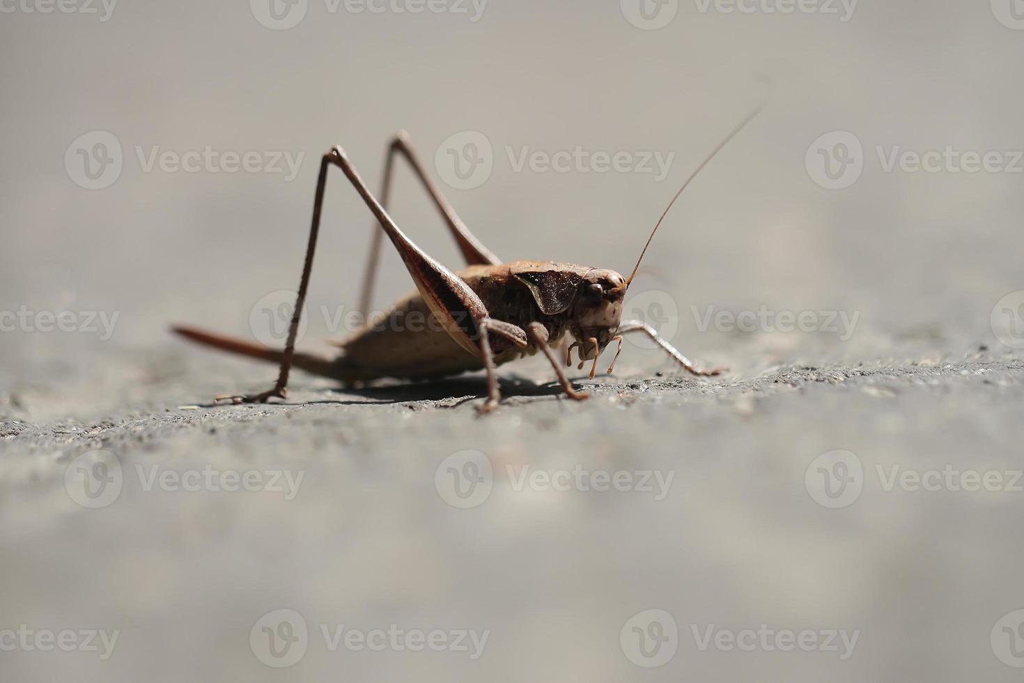 liten gräshoppa utomhus foto