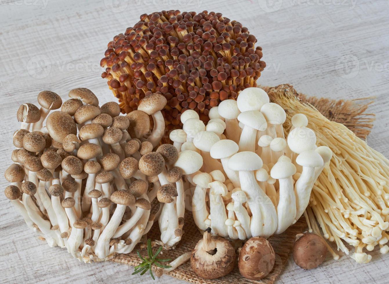 färska svampar foto