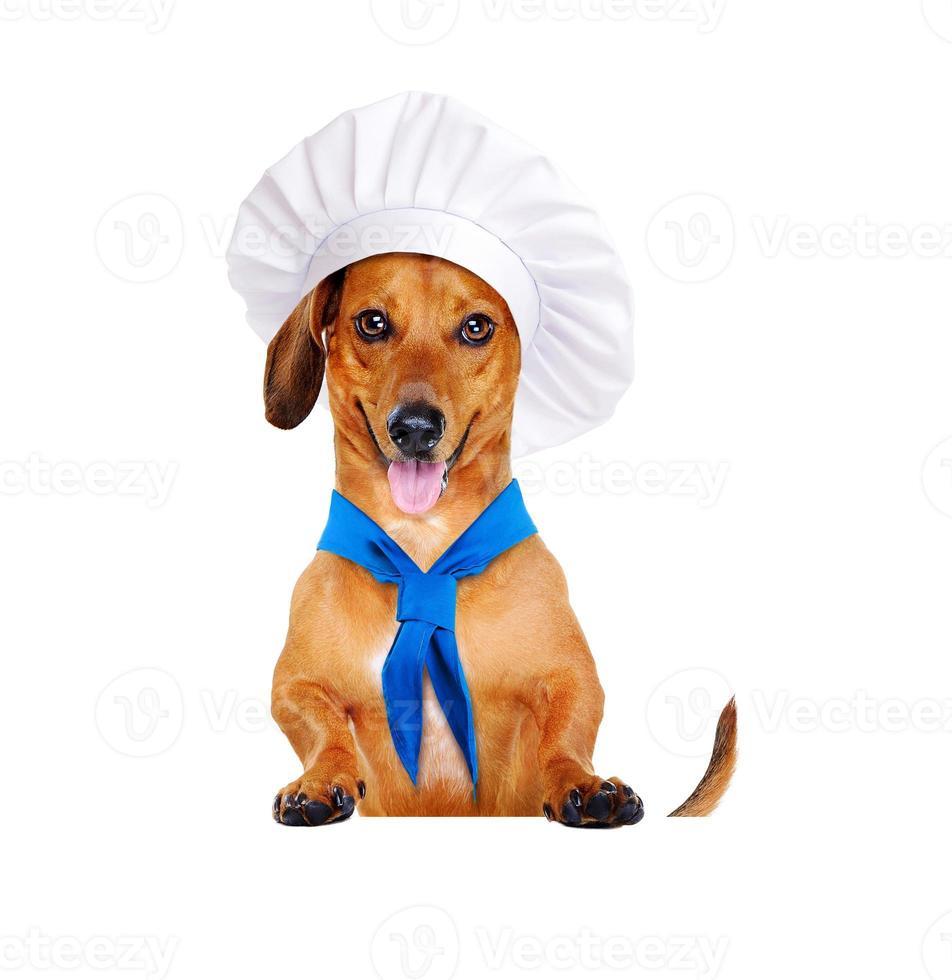 hund kock kock foto