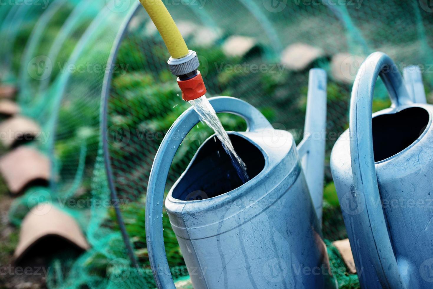 trädgårdsarbete, fylla vattenkanna med vatten för att vattna växterna foto