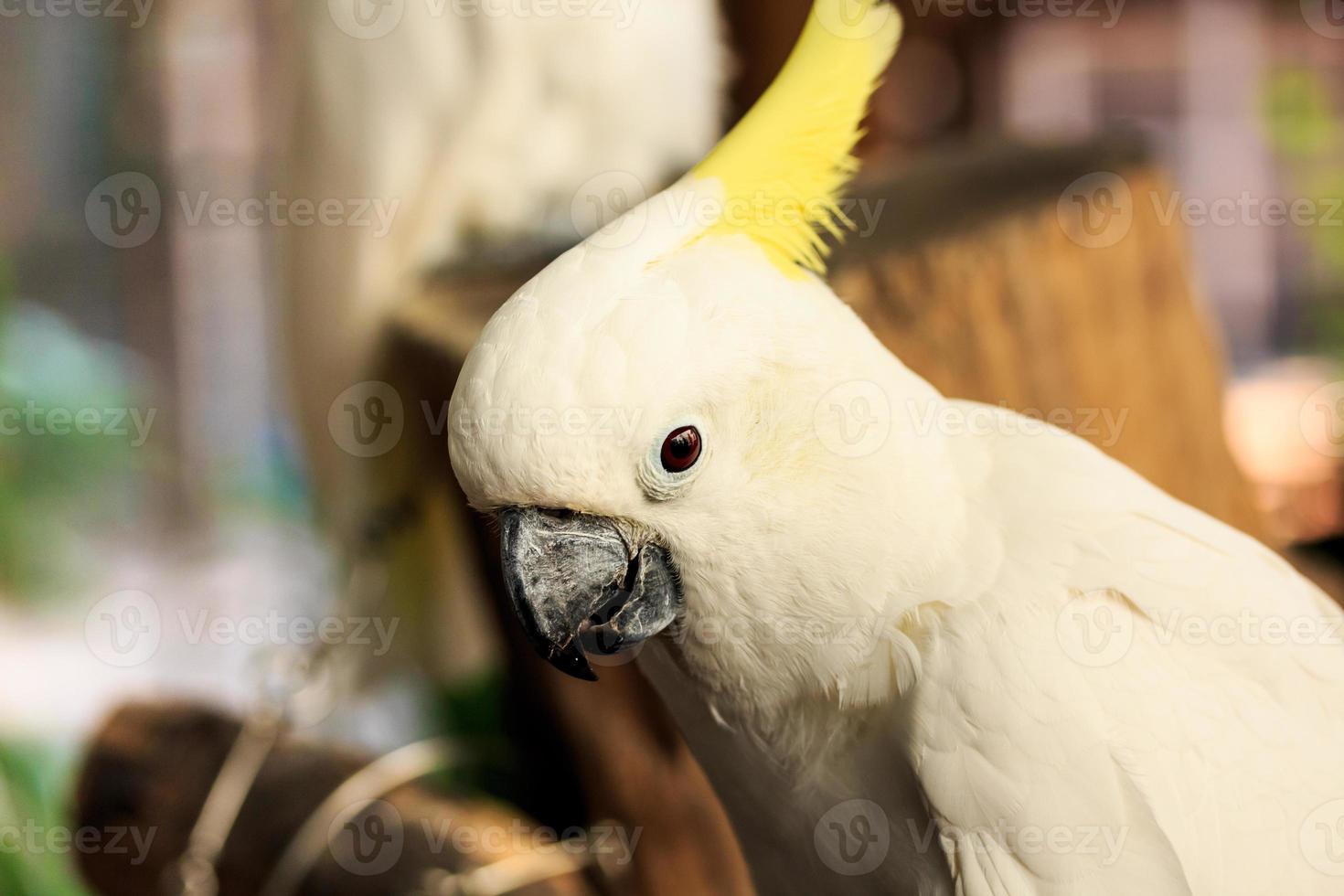 cockatoo fågel. foto