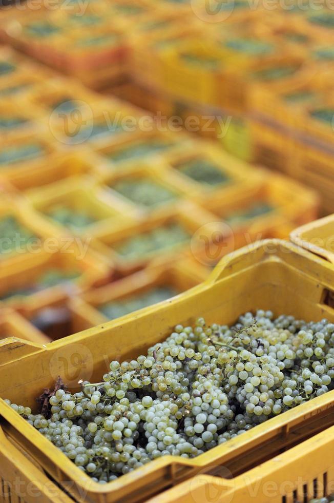 lådor med druvor i förgrundens vertikala foto