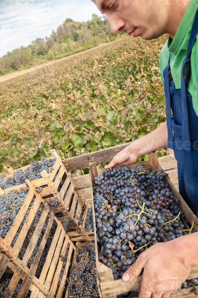 bonde som arbetar i vingården foto