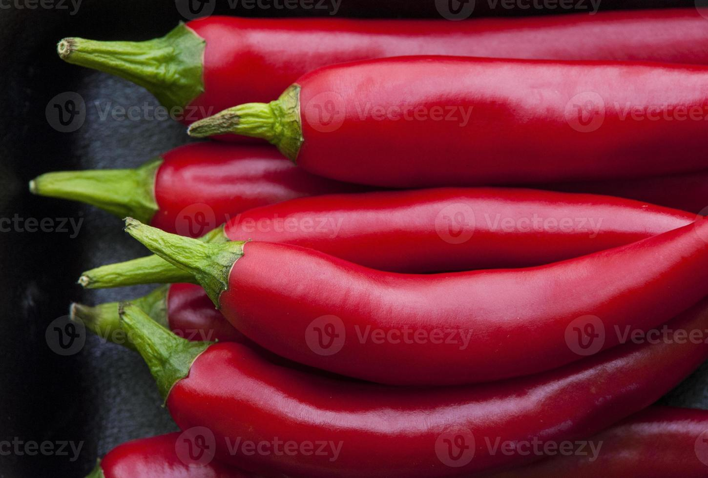 chilipeppar röd foto