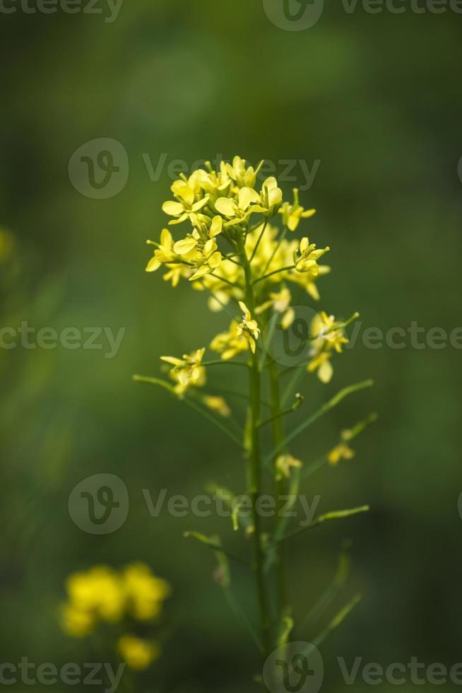 blommor grönsaker foto