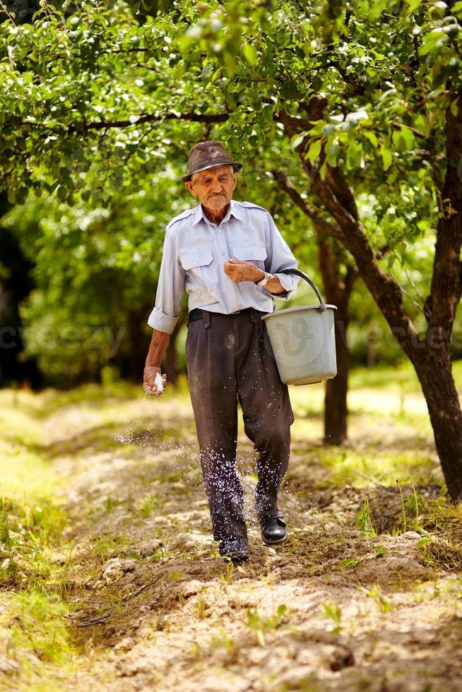 gammal bonde som gödslar i en fruktträdgård foto