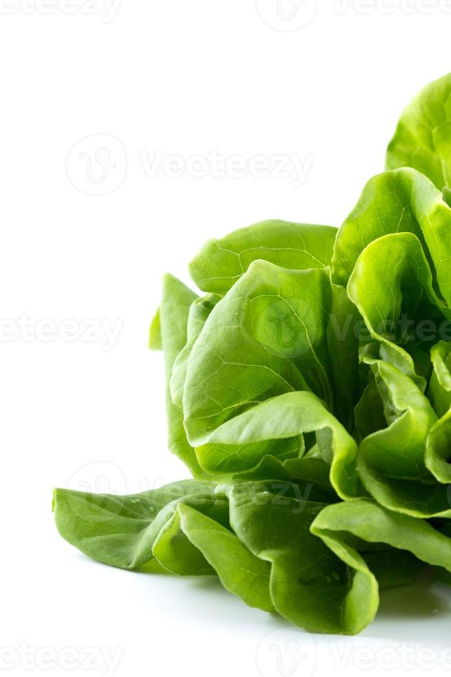 hydroponisk grönsak foto