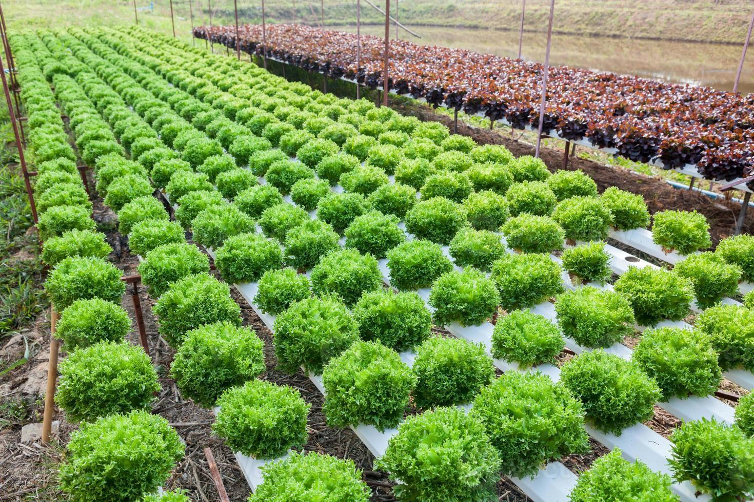 organisk hydroponic grönsaksträdgård foto