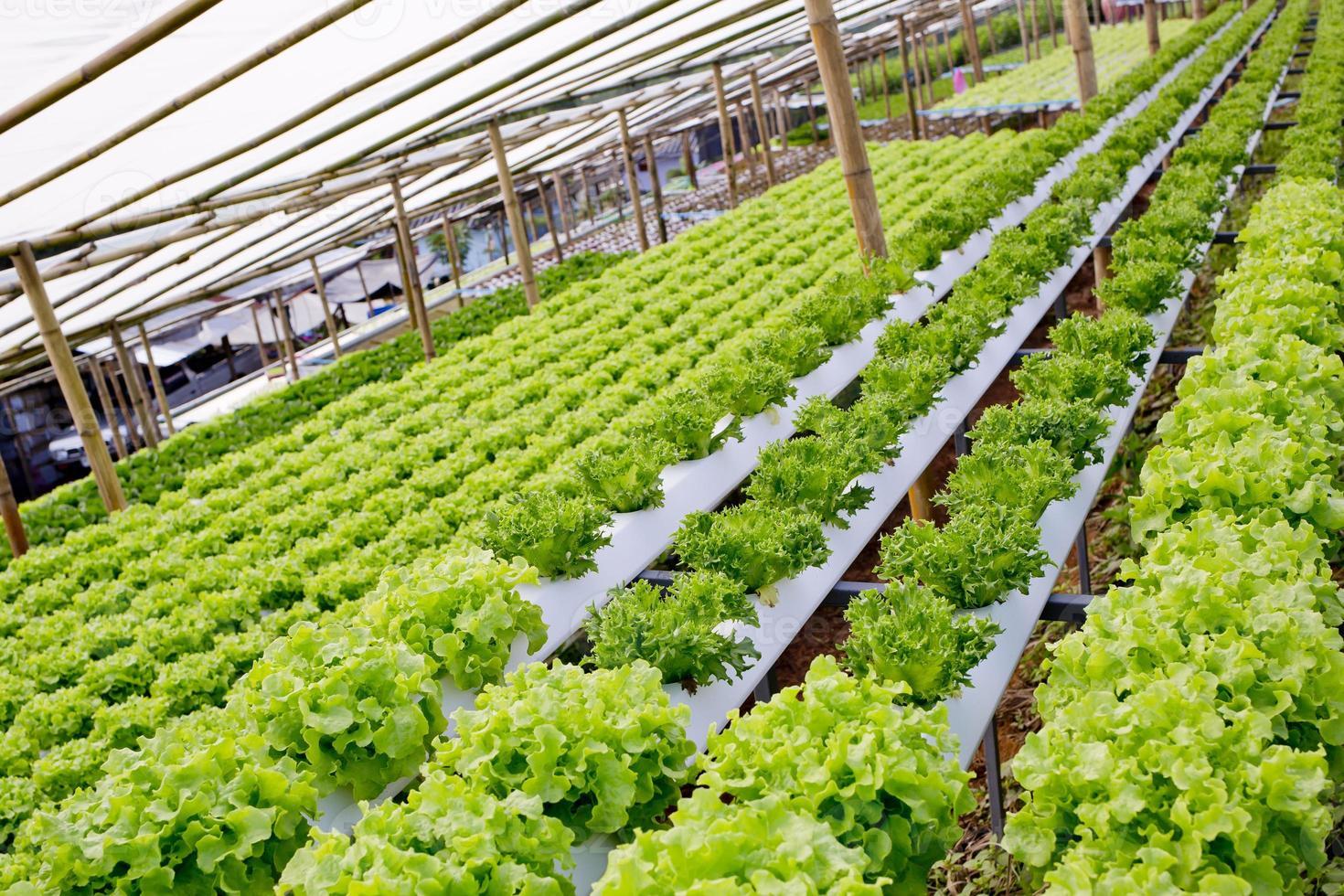 organisk hydroponic vegetabilisk odlingsgård. foto