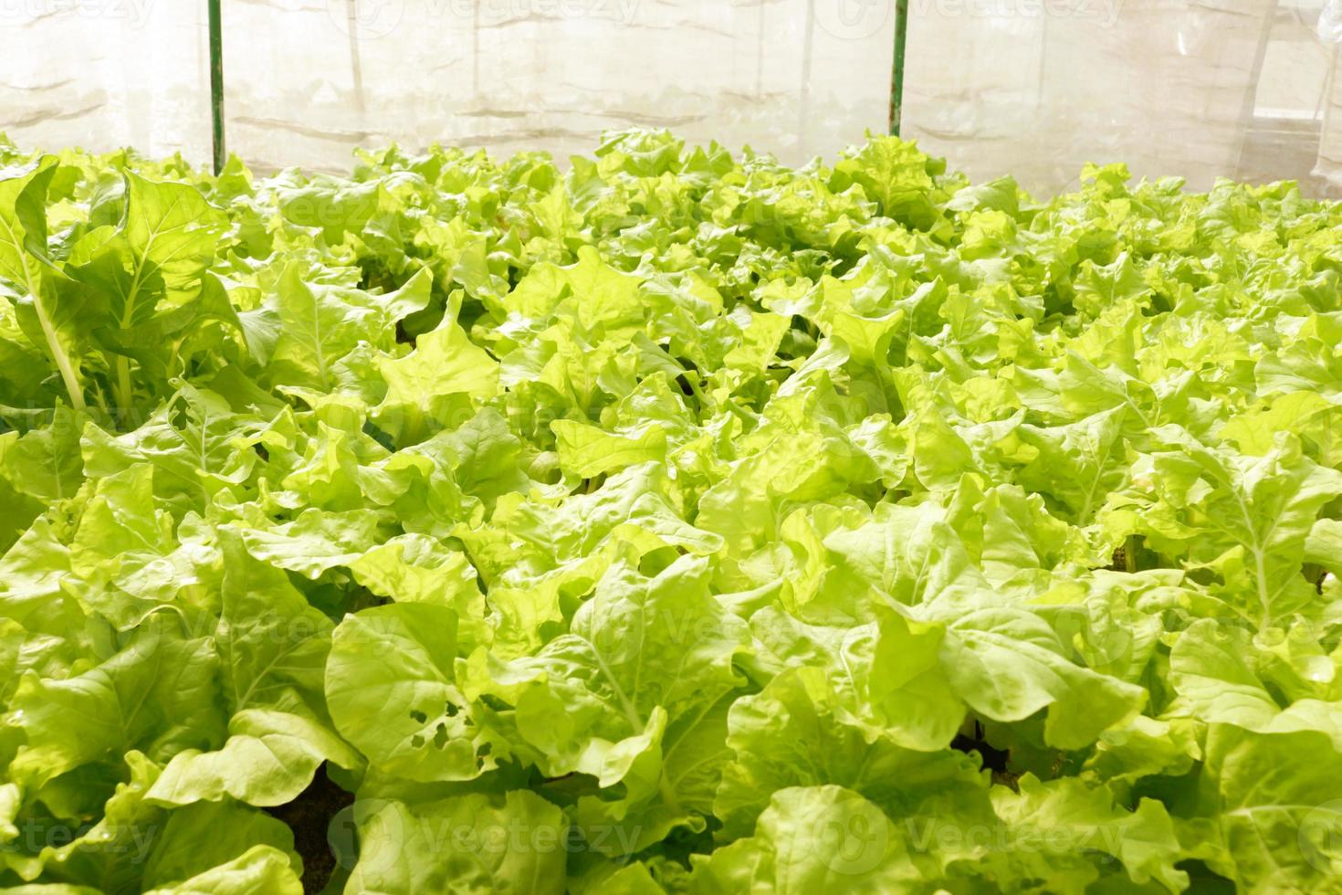 jordbruks foto