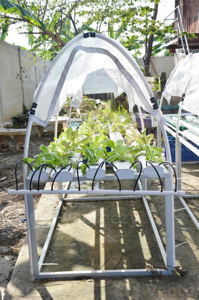 odling av organiska grönsaker eller giftfri grönsak foto