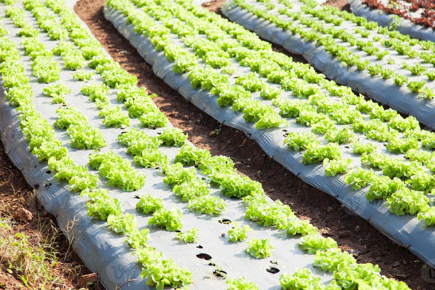 grönsaker planterade i tomter foto