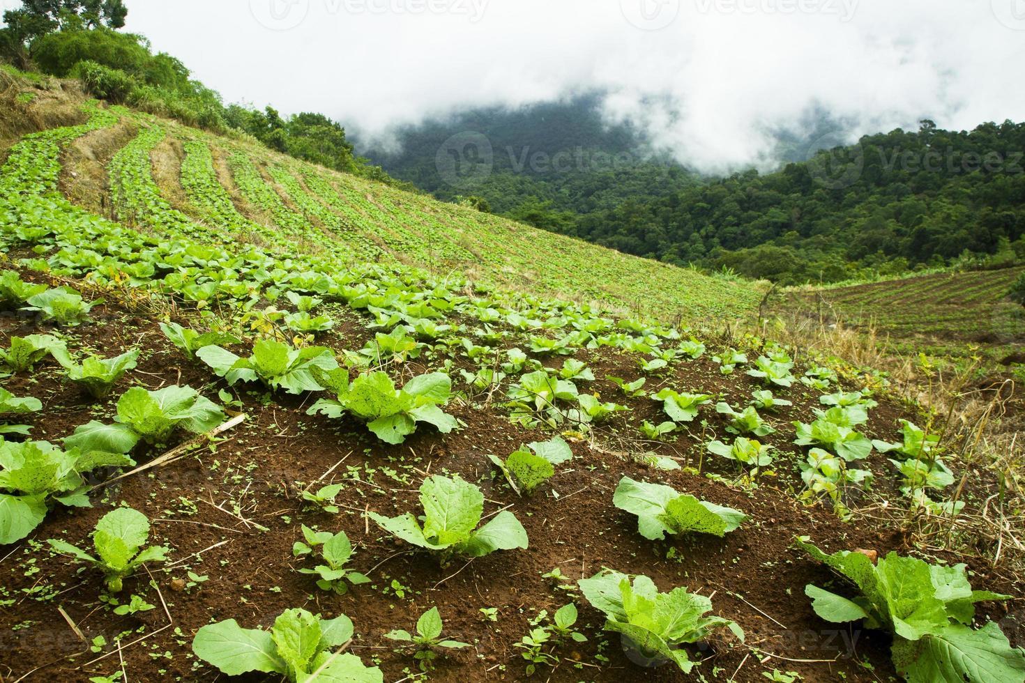 grönsak steg säng på berget foto