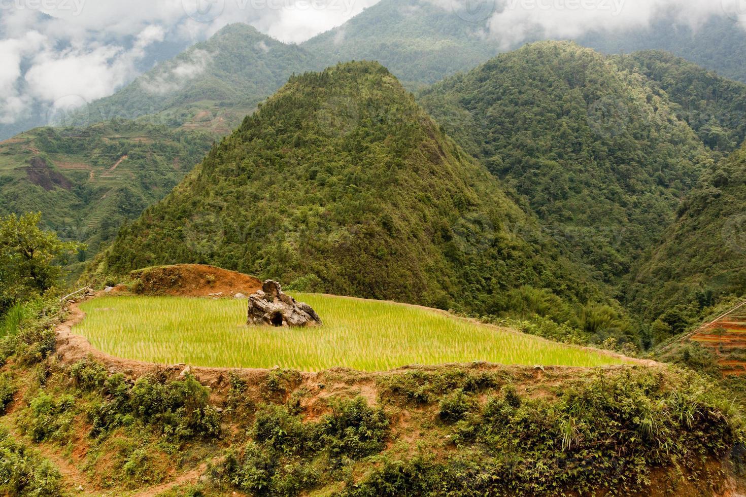 risfält med sten foto