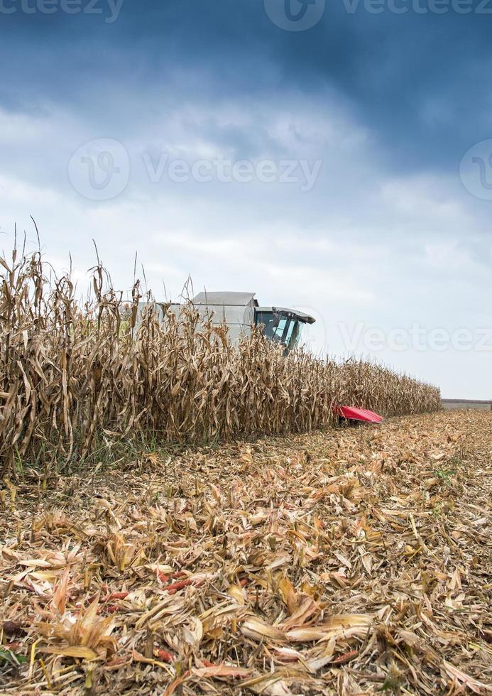 skörd av majs foto
