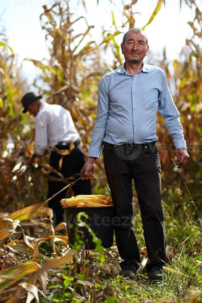 jordbrukare vid majsskörden foto
