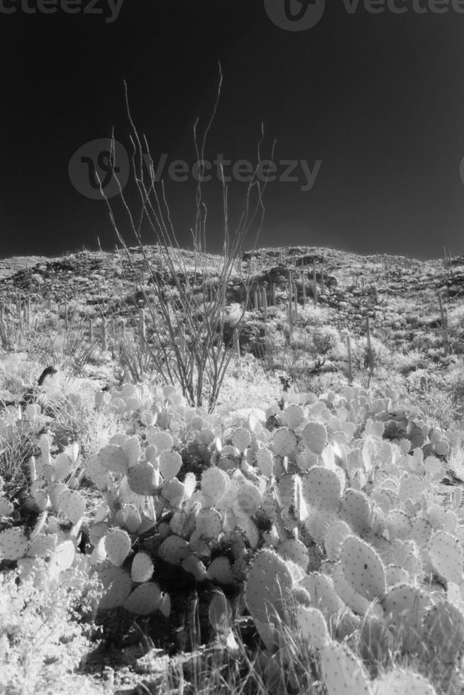 infraröd öken foto