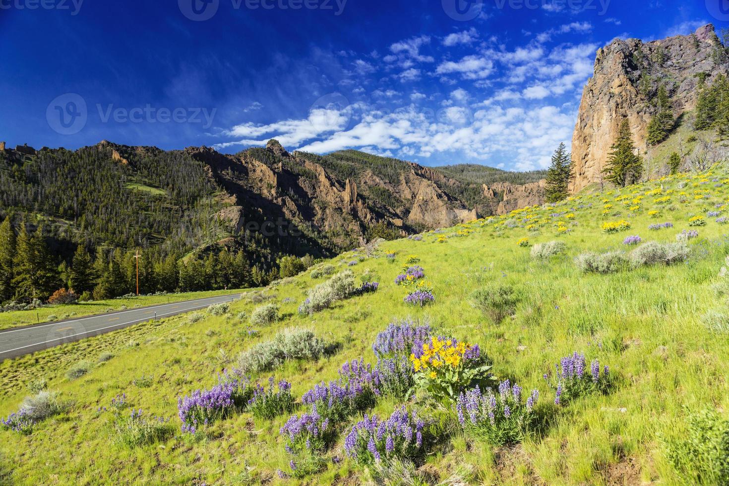 Yellowstone nationalpark foto