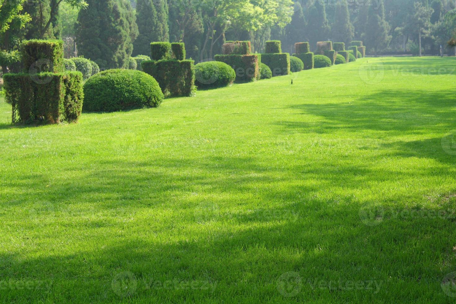 grönt trädgårdslandskap foto