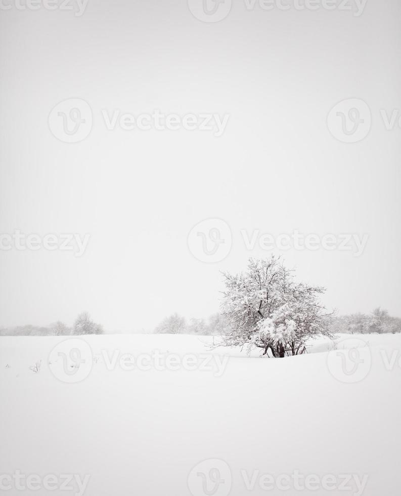 minimalistiskt vinterlandskap foto