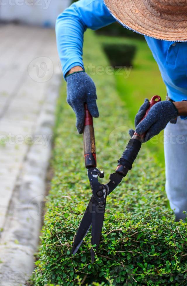 anlagda trädgårdsarbetare foto