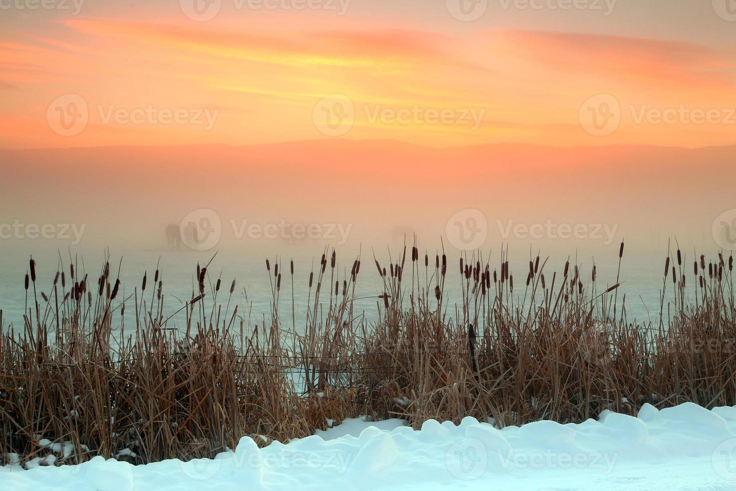 vintersoluppgång foto